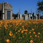 150x150 cemetery
