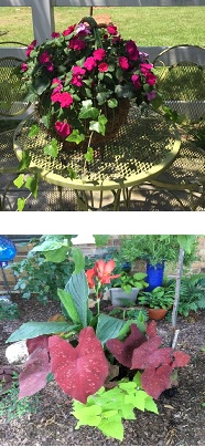 Peggy's column - shade garden 2
